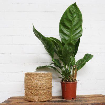 Pflanze und Topf