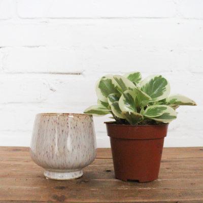 Pflanze + Wunschtopf