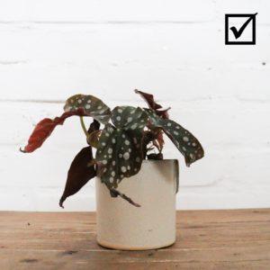 Pflanze steht im Vordergrund