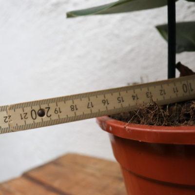 Durchmesser Pflanzen