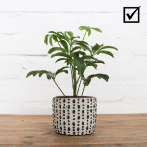 schlichtere Pflanze passt besser