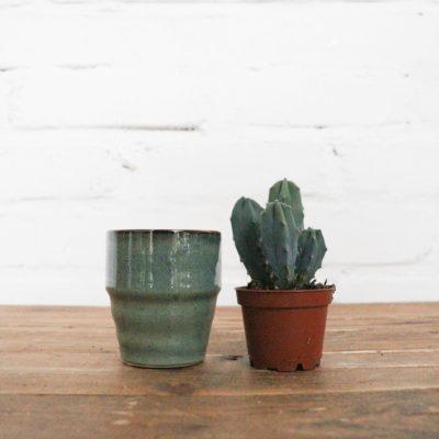 Kaktus + Wunschtopf